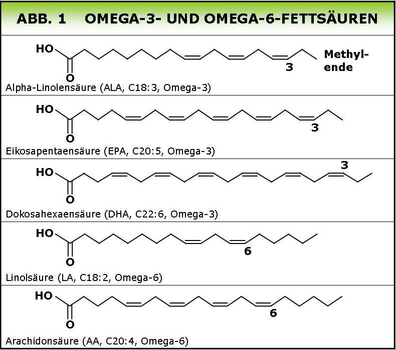 Gesunde öle Verhältnis Omega 3 Zu Omega 6