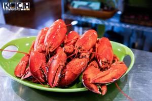 Lobster - www.kochhelden.tv